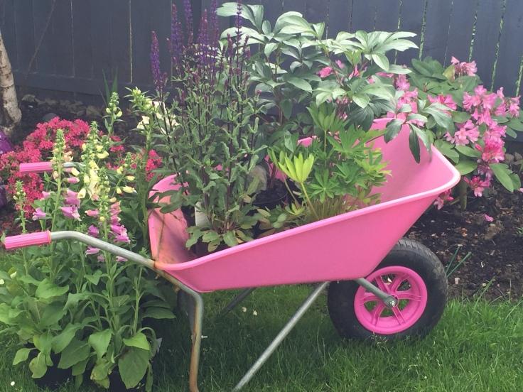 the pink wheelbarrow