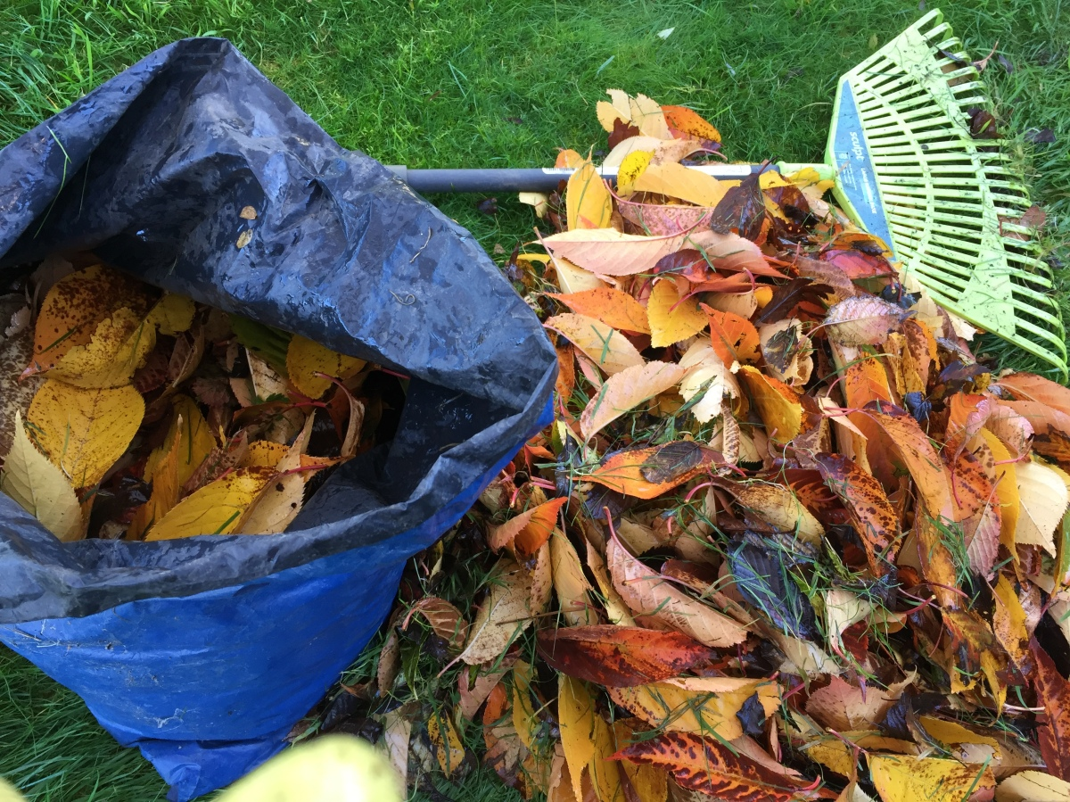 3 Steps to Free Leafmould Compost